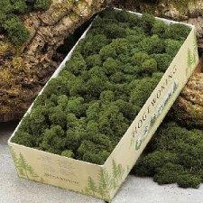 Musgo natural verde. 500 Grs.