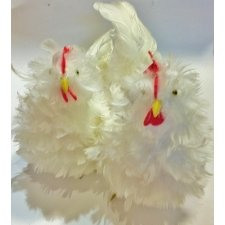 2 Gallinas con plumas blancas 22x15 cms