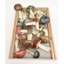 Caja de madera con 19 setas